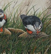 Image of Katherine Cooper's painting, 'Puffin Magic'.