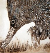 drypoint print & watercolour - Echidna
