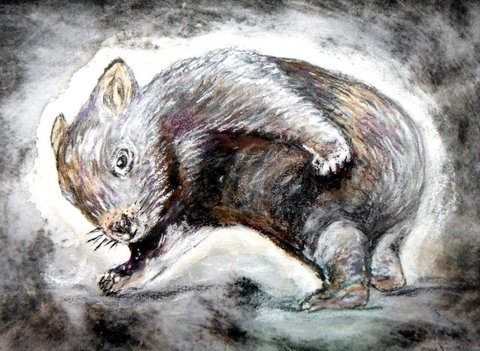 drypoint print & watercolour - Wombat