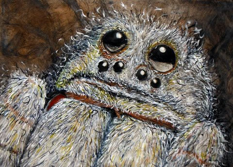 drypoint print & watercolour - Wolf Spider