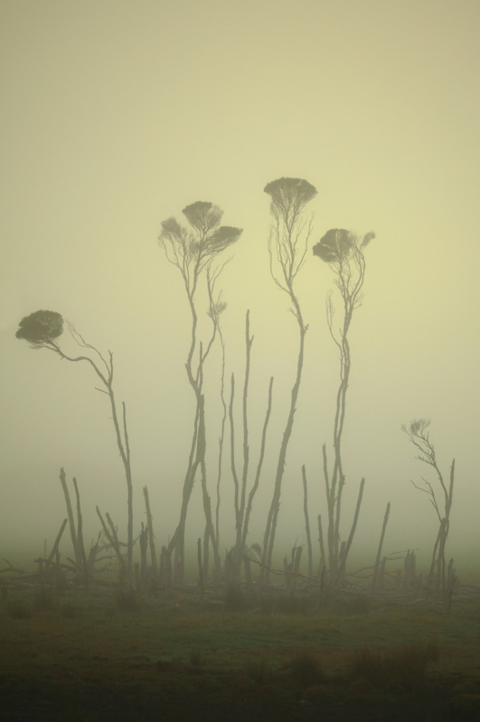 A photograph of trees in a misty setting