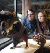 Visitors in the Bond Store with a Tasmanian devil