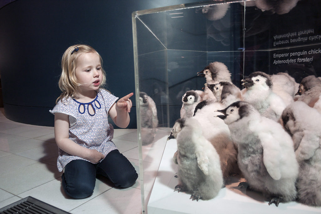 Young visitor in the Islands to Ice gallery with penguins