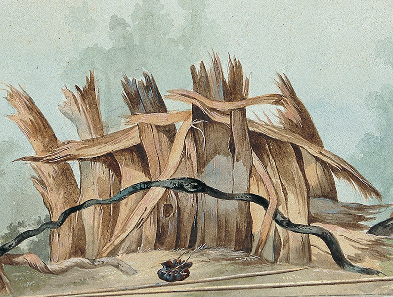 Terre de Diemen Breakwind with basket, water carrier and spears (detail), 1802 Gouache. Le Havre France, Museum d'histoire naturelle