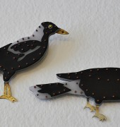 Magpie and Currawong