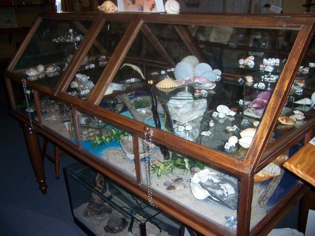 Ward case with Tasmanian shell collection