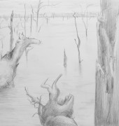 Drowned trees, Lake Echo, Tasmania (2015), pencil, 56×76 cm