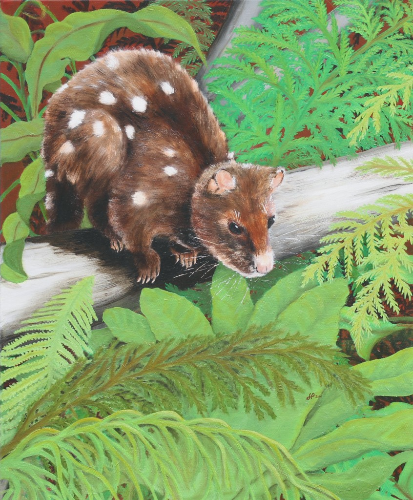 Spotted Quoll oil on canvas