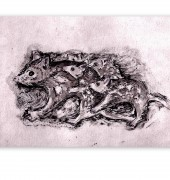 etching - Quoll Family