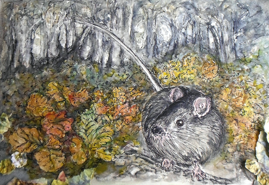etching, watercolour, collage - Tasmanian Native Mouse