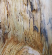 Local artists reflect on the nature of wood.