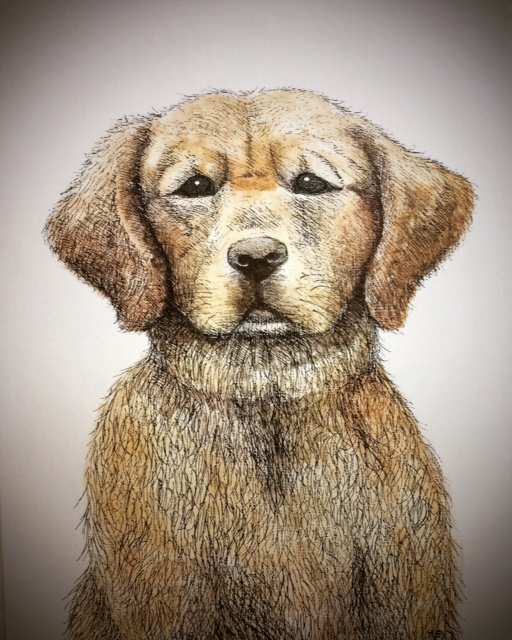 Golden Retriever - detail of technique