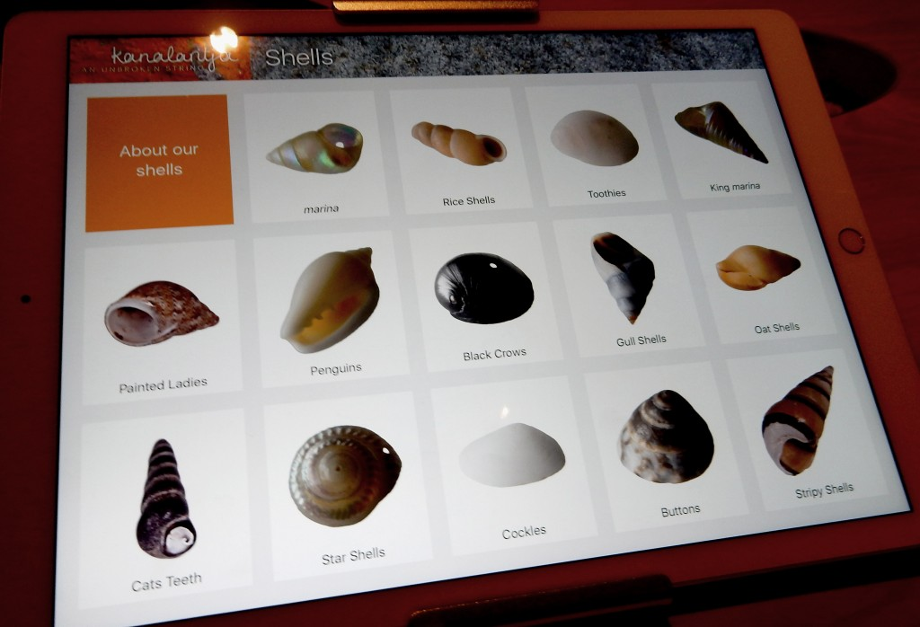 Shell types in the kanalaritja exhibition