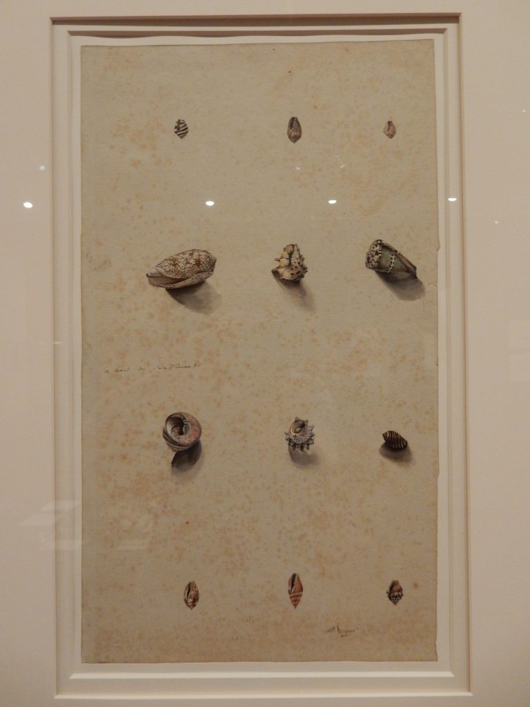 Shells of Western and North Western Australia by Charles Alexandre Lesueur