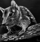 Earth Designs - Spotted Quoll