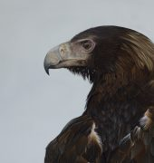 Wedge-tailed Eagle, oil on wood, 40 x 80cm, Sebastian Galloway, 2018