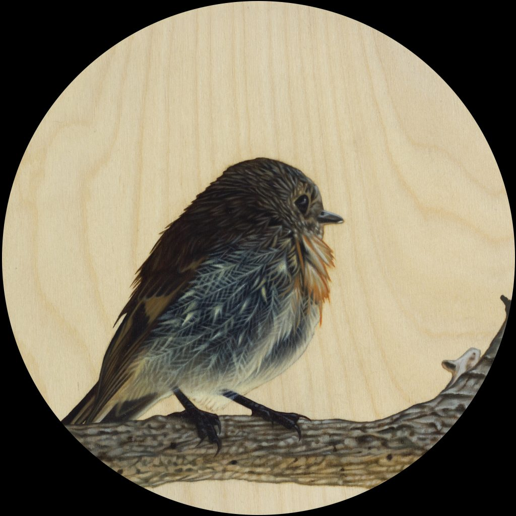 Fledgling, oil on board, 20cm diameter, Sebastian Galloway, 2018