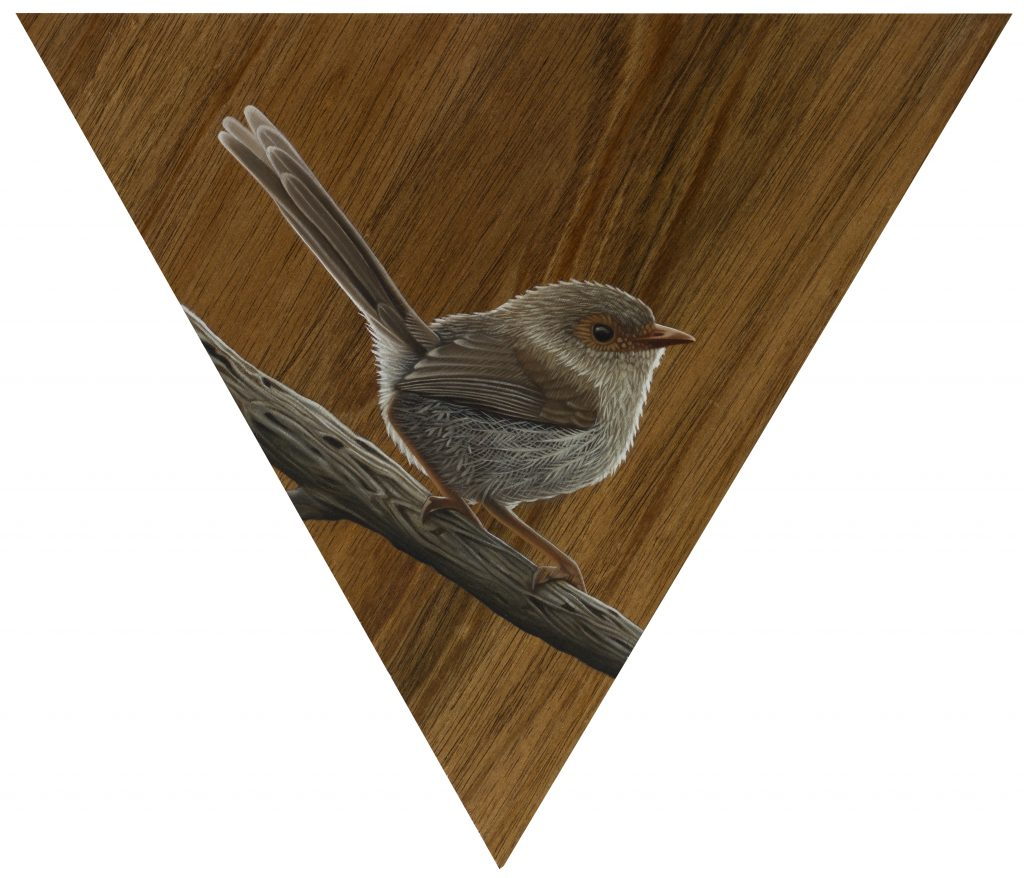 Fairy-wren II, oil on Blackwood panel, triangle 30cm sides, Sebastian Galloway, 2018