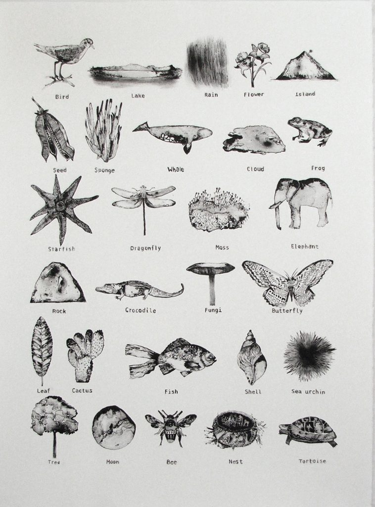 Catalogue of the Natural World, Kaye Green, 2014