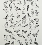 Bird Catalogue I, Kaye Green, 2014
