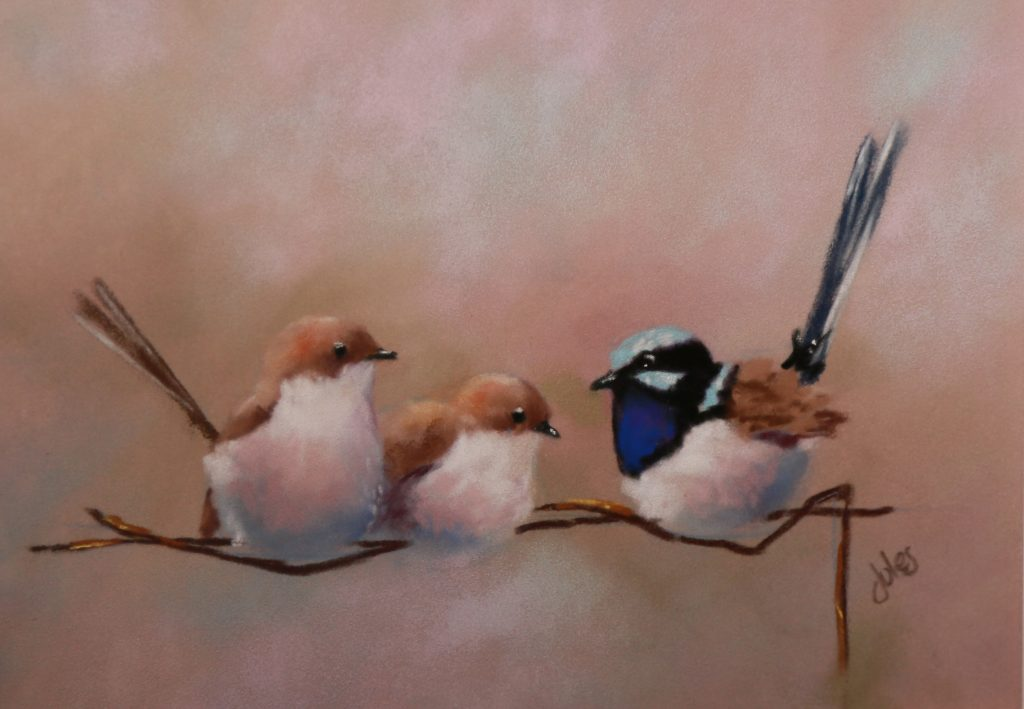 Superb Fairy Wrens, Julie Wickham, 2018. Photographer: Pauline Winwood