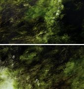 1. Habitat, Hawley Beach (Bracelet Honey Myrtle, Melaleuca armillaris, Pink), 2019, diptych, oil on linen, each panel 86 x 122cm, $9250, Kylie Elkington, 2019