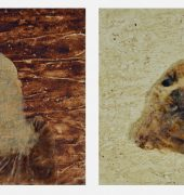 images of a woman and a seal