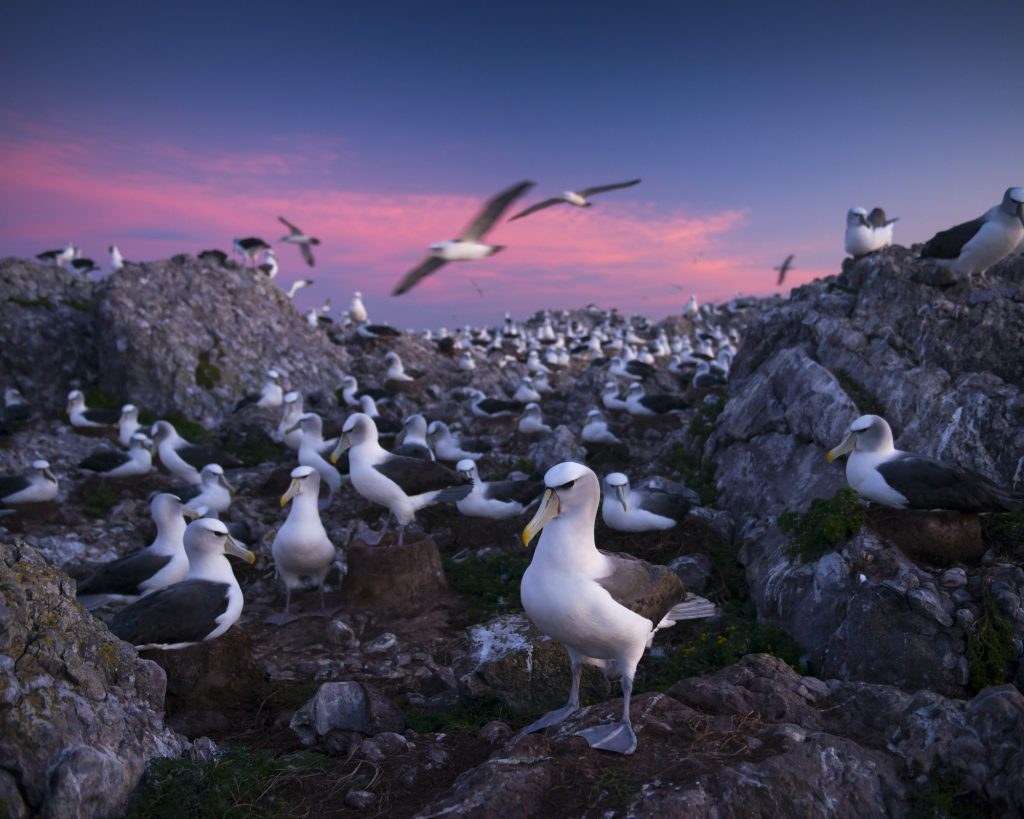 North Colony II, On Albatross Island, Matthew Newton, 2014