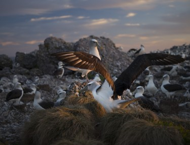 Last Light, On Albatross Island, Matthew Newton, 2014