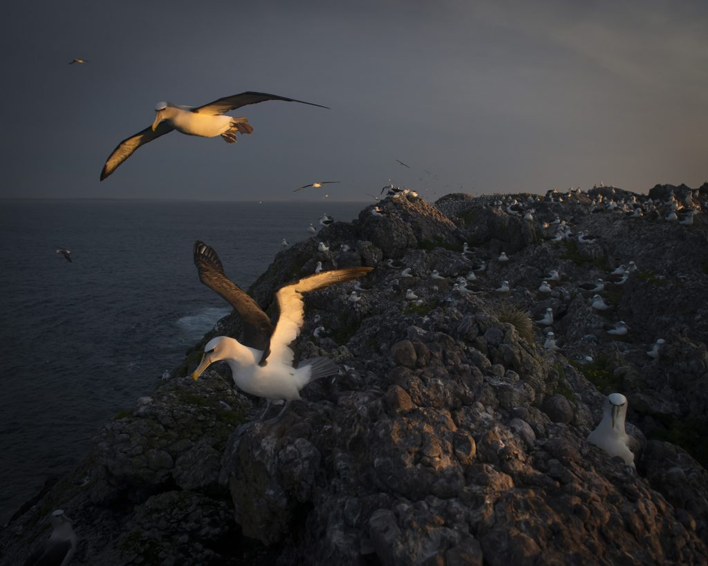 Leaving on the Light, On Albatross Island, Matthew Newton, 2014