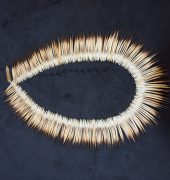 Echidna quills, flax thread and an echidna claw clasp