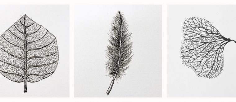 Hannah Blackmore. Leaf, Feather, Seed. Pen and ink on paper.