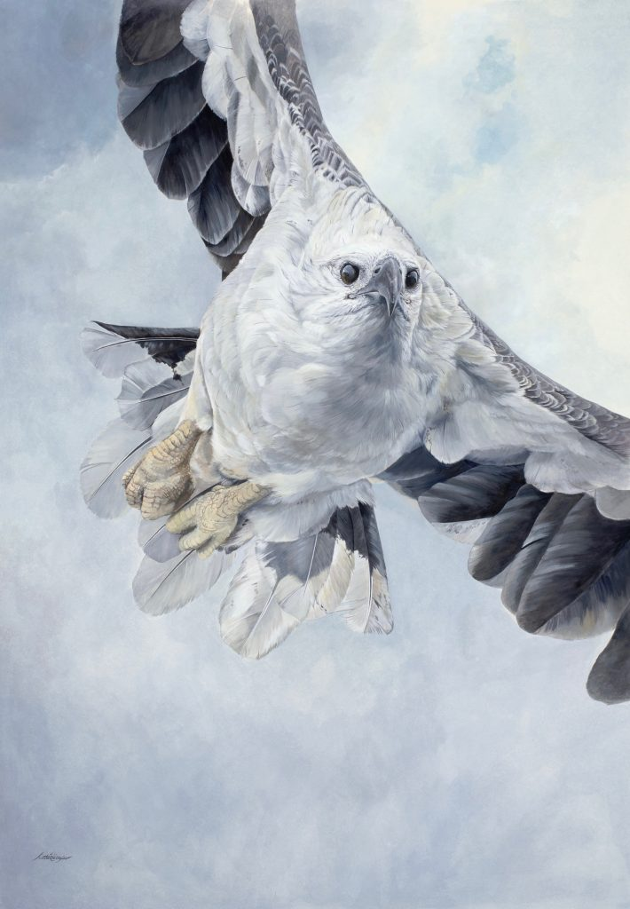 Katherine Cooper. Final Approach – White bellied Sea Eagle. Watercolour gouache on 640 gsm hot press rag paper. Award of Excellence – National Holmes Arts Prize 2019.
