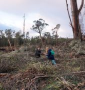 the artists collect wood in an old logging coup in Southern Tasmania
