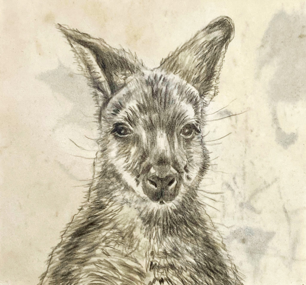 LORRAINE BIGGS_TWO-FAST (detail 1)_2021_pencil drawing on wallaby parchment_155cmx140cm